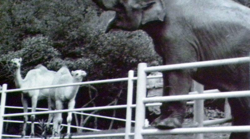 Титови љубимци у његовом зоо врту