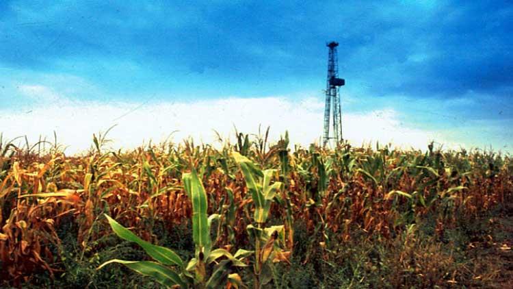 ДВА ЗЛАТА – нафташки торања изнад бескрајног војвођанског поља под кукурузом